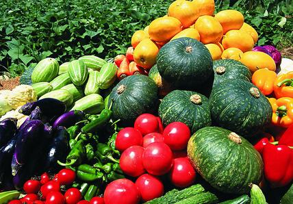 季节性价格上扬11月寿光蔬菜指数涨40%
